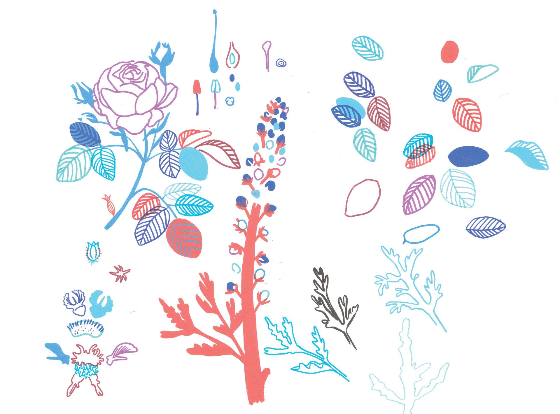 La Diane française illustration camille de cussac
